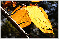 Autumn leaves on Tree Surgery page