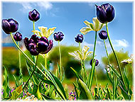 Photo of tulips on Garden Design page