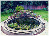 Photo of a lily pond for water features page