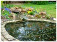 Photo of a pond for water features page