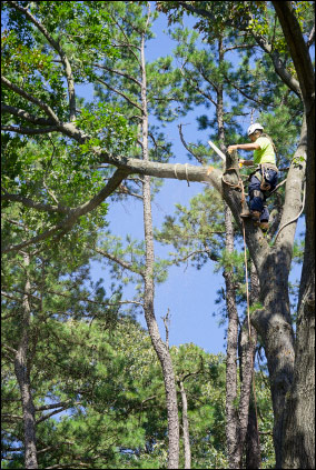 Tree surgeon in West Sussex